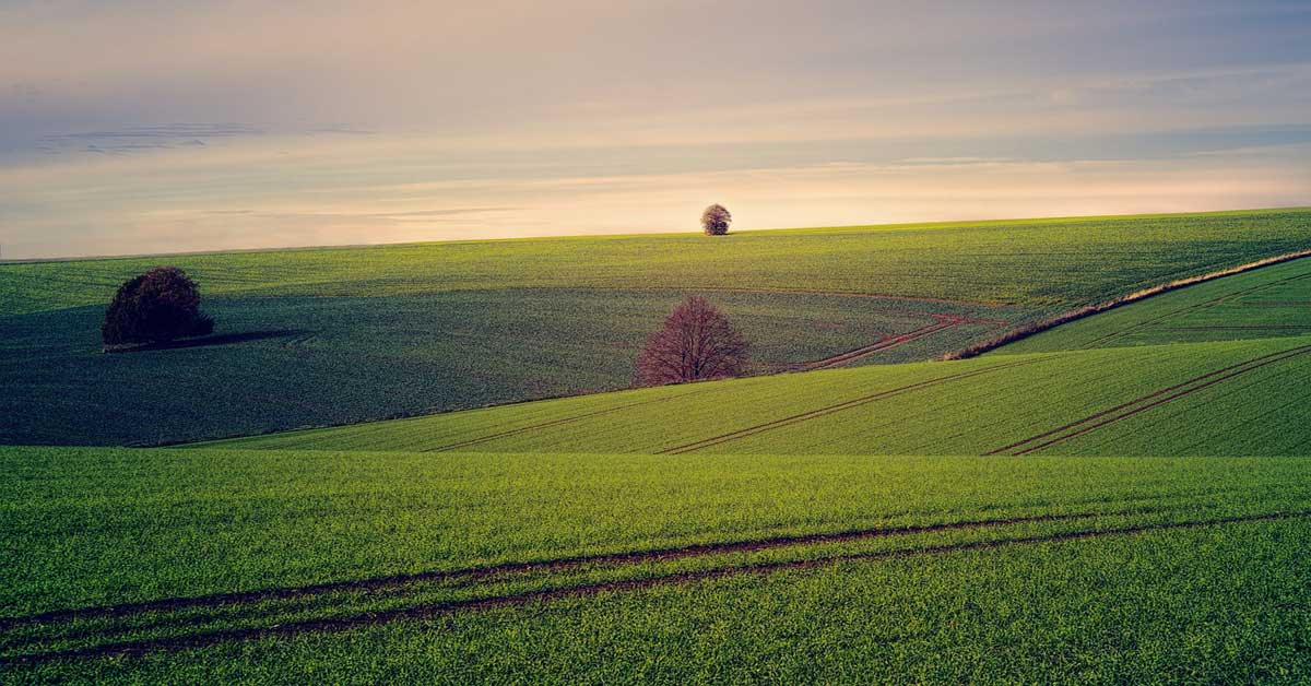 Widows & Landlessness